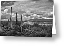 A Sonoran Winter Day In Black And White  Greeting Card