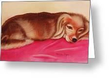 A Spaniel's Nap Greeting Card