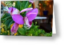 A Splash Of Fuchsia Greeting Card