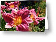 A Splash Of Lilies Greeting Card