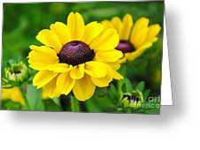 A Splash Of Sunshine Greeting Card
