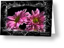A Splash On The Flowers. Greeting Card