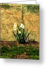 A Spot Of Spring Greeting Card