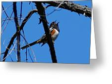 A Spotted Towhee Mid-song Greeting Card