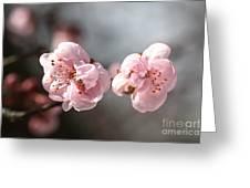 A Spring Dream Greeting Card