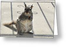 A Squirrel Known As Chippy Greeting Card