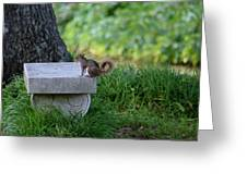 A Squirrel's Day Out Greeting Card