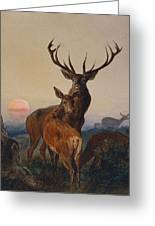 A Stag With Deer In A Wooded Landscape At Sunset Greeting Card