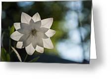 A Star In My Garden Greeting Card by Georgia Mizuleva