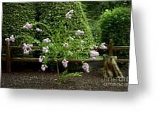 A Starburst Of Pink Greeting Card