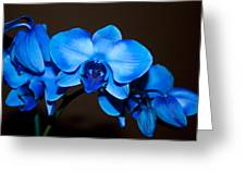 A Stem Of Beautiful Blue Orchids Greeting Card