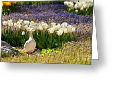 A Stone Duck Statue  Greeting Card