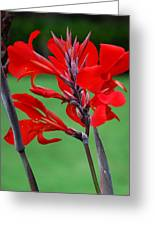 A Summer Red Flower Greeting Card
