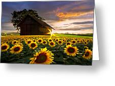 A Sunflower Moment Greeting Card