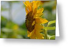 A Sunflower Profile Greeting Card