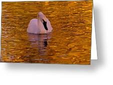 A Swan On Golden Waters Greeting Card