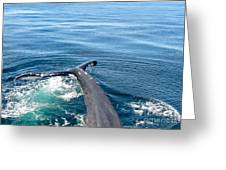 A Tail Of A Whale Greeting Card by Bette Phelan
