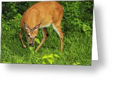 A Taste Of Nature Greeting Card