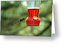 A Tiny Little Ruby-throated Hummingbirds Greeting Card