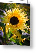 A Touch Of Sunflower Greeting Card