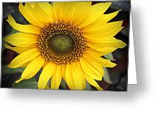 A Touch Of Sunshine - Sunflower Greeting Card