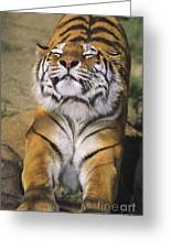 A Tough Day Siberian Tiger Endangered Species Wildlife Rescue Greeting Card