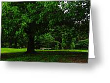 A Tree And A Bench Greeting Card