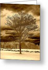 A Tree At Appleton Greeting Card