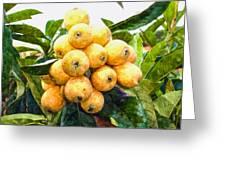 A Tree Full Of Ripe Loquats Greeting Card