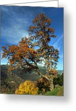 A Tree In Arcadia - Greece Greeting Card