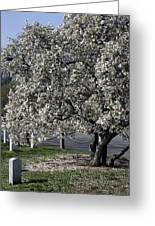 A Tree In Arlington Greeting Card