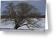 A Tree In Canaan 2 Greeting Card