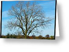 A Tree In Fall... Greeting Card