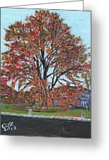 A Tree In Sherborn Greeting Card