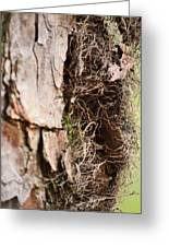 A Treetrunk Abstract Greeting Card