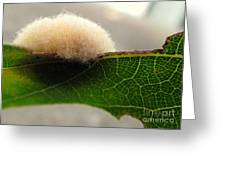 A Tribble On The Edge Greeting Card