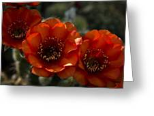 A Trio Of Red  Greeting Card