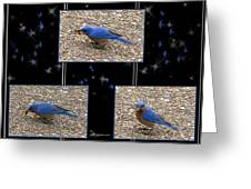 A Typical Eastern Bluebird's Lunch - Featured In Comfortable Art Group Greeting Card