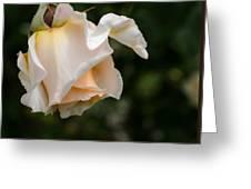 A Unique Beauty - Flower Art Greeting Card