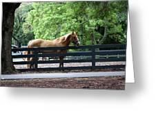 A Very Beautiful Hilton Head Island Horse Greeting Card