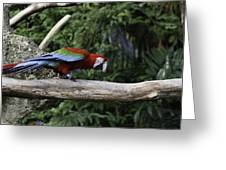 A Very Colorful And Bright Macaw Bird Perched On A Branch Greeting Card