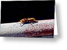 A Vespid Wasp  Greeting Card