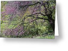 A View Of A Blooming Redbud Tree Greeting Card