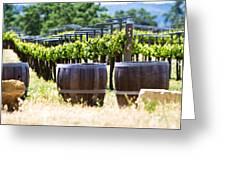 A Vineyard With Oak Barrels Greeting Card