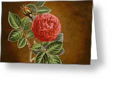 A Vintage Rose Romance L Greeting Card