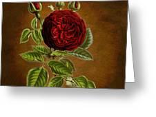 A Vintage Rose Wonder Greeting Card