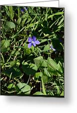 A Violet Greeting Card