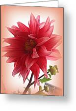 A Vision In  Coral - Dahlia Greeting Card