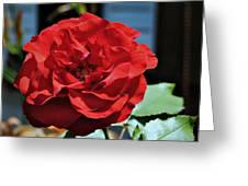 A Vivid Red Rose Greeting Card