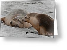 A Wake Up Kiss Greeting Card
